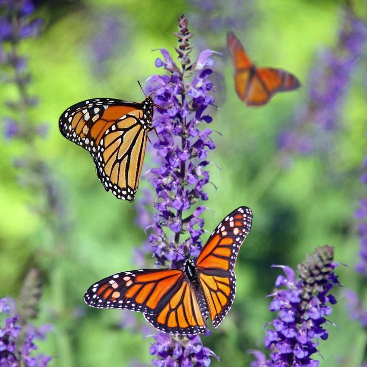 embrace your butterflies